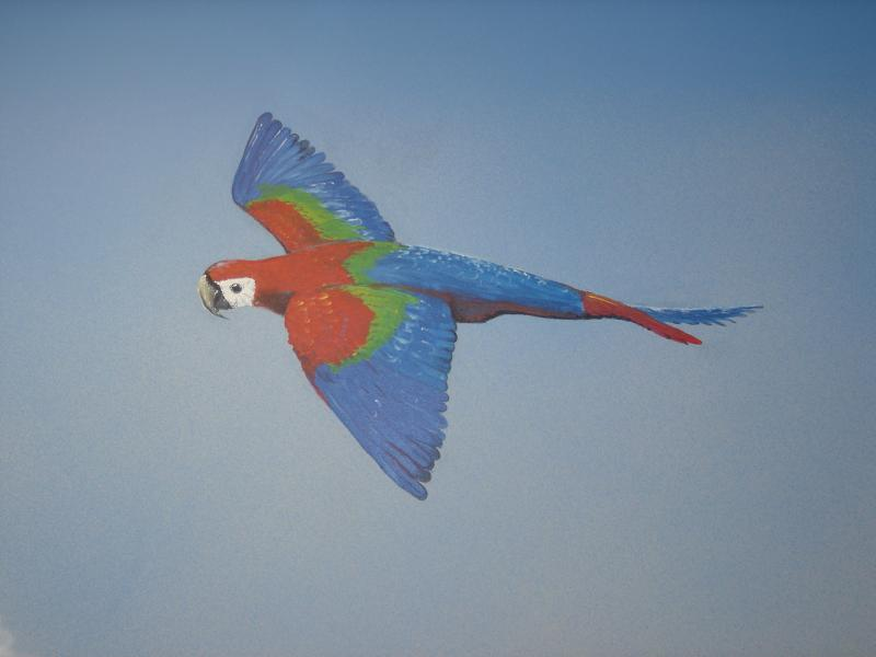 Parrot form Mural